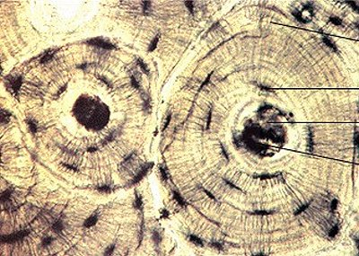 Живые клетки