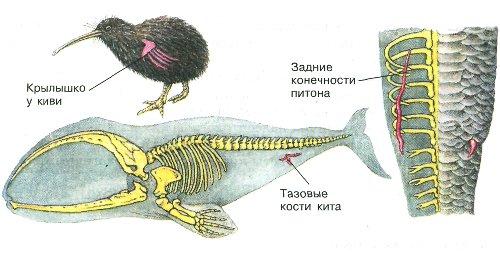 Размещения животных на земле