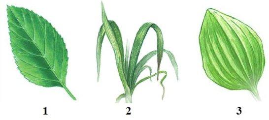 Классы покрытосеменных растений